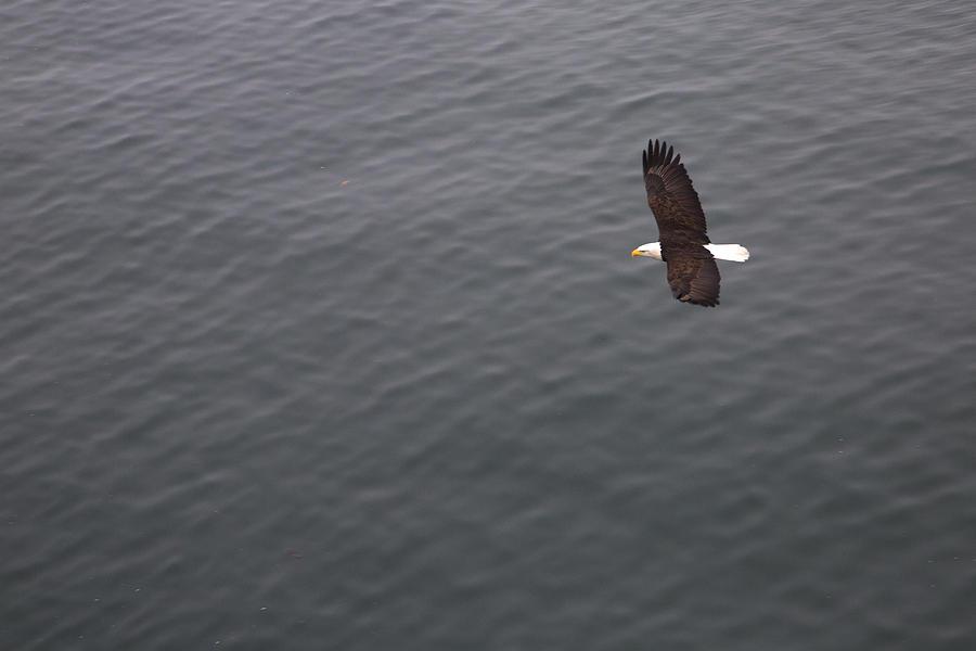 Flight Photograph - Flight by Joanna Madloch