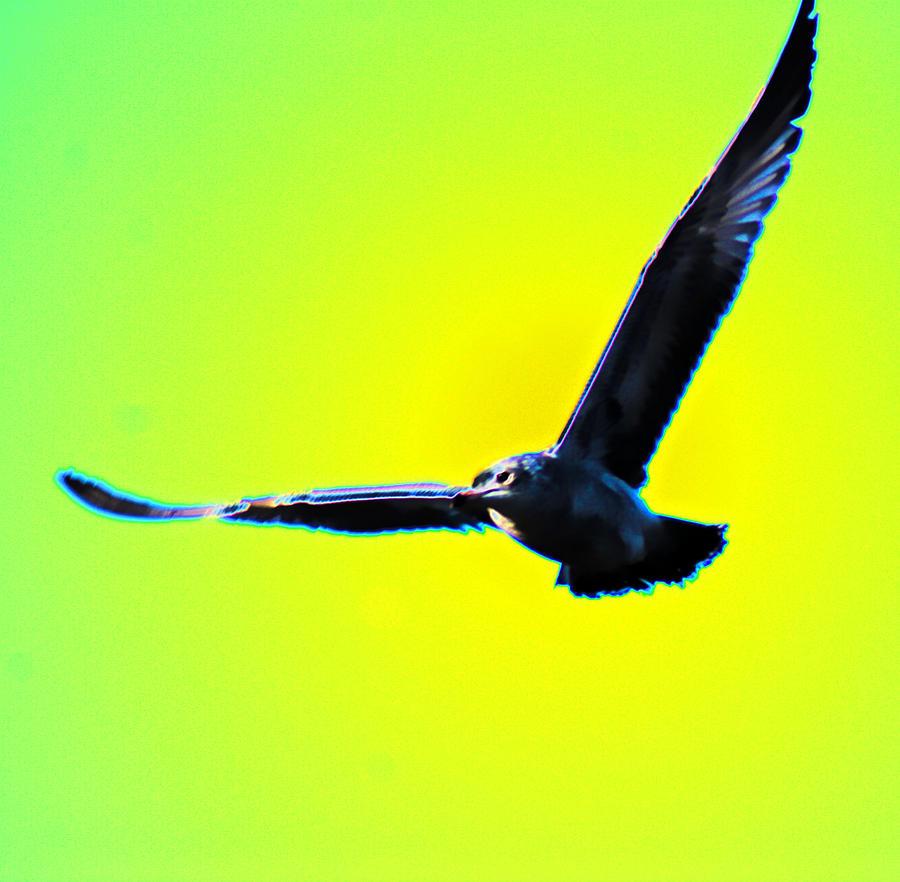 Flight Photograph by Joe Bledsoe