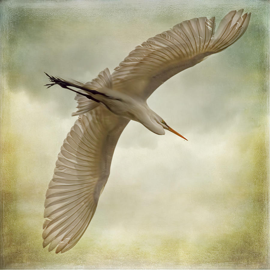 Flight Of The Egret Photograph