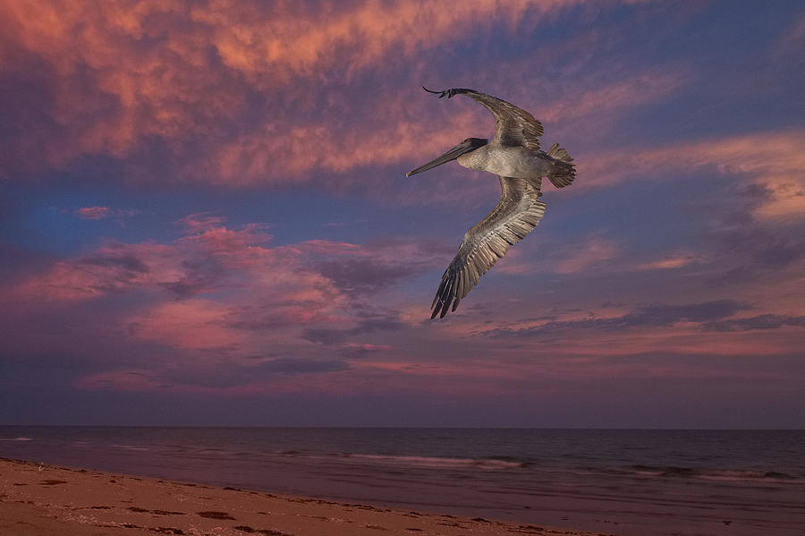 Pelican Photograph - Flight Over Enchanted Beach by Robert Bascelli