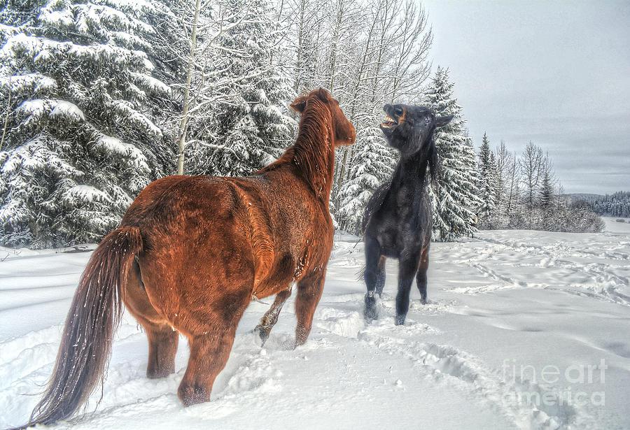 Horse Photograph - Flirtation by Skye Ryan-Evans