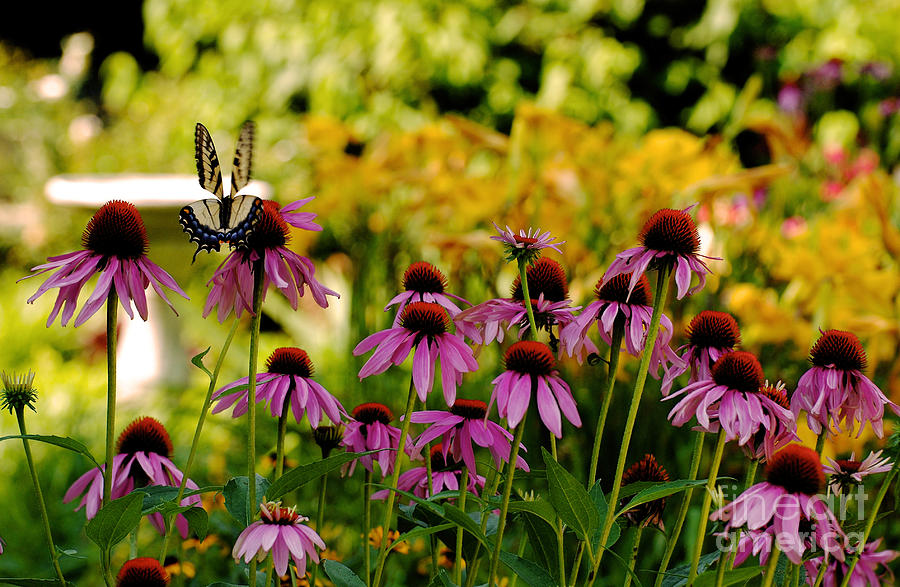 Butterfly Photograph - Float Like A Butterfly by Lois Bryan