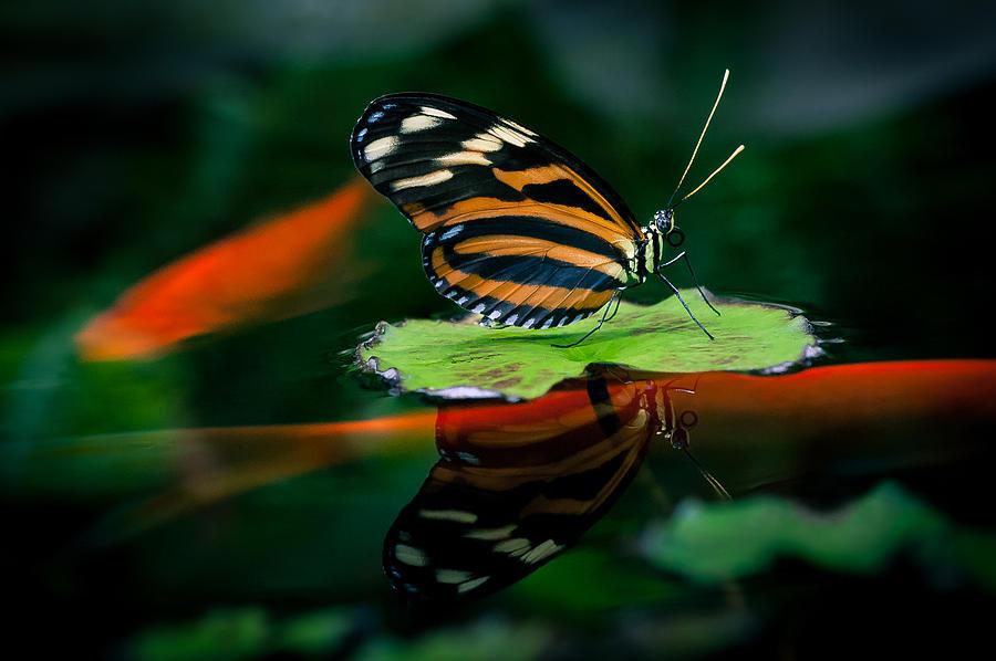 Floating By On Koi-Ness by Jen Baptist