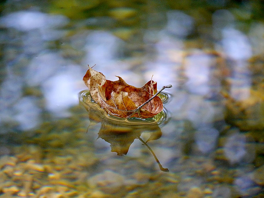 Floating Fall Leaf by Richard Reeve