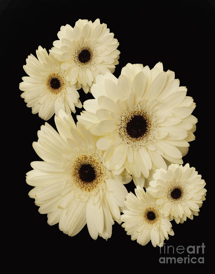 Flowers Photograph - Floating Flowers by Nancy Dempsey
