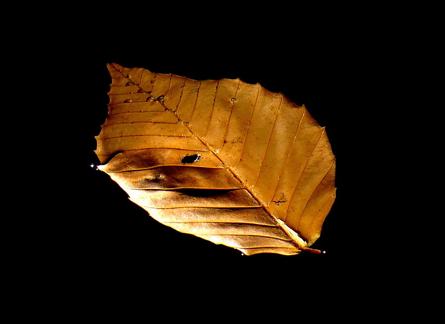 Leaf Photograph - Floating Freely by Stephen Melcher