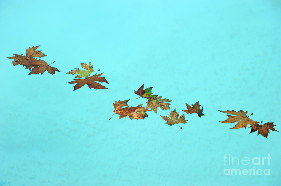 Leaf Photograph - Floating by Grigorios Moraitis