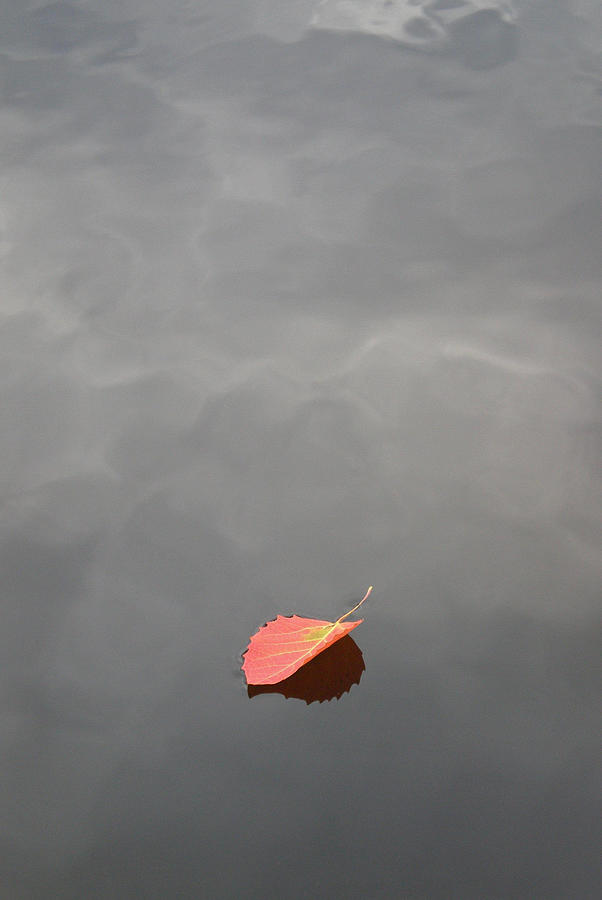 Vermont Photograph - Floating Jewel by Jake Barbour