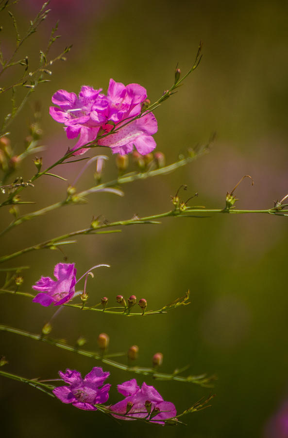 Wildflowers Photograph - Floating by Julie Andel