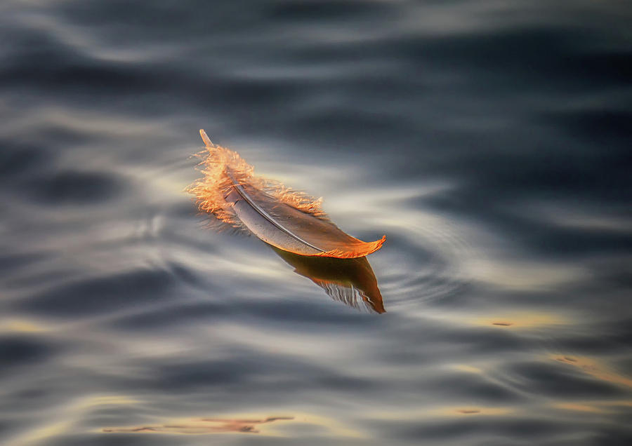 Feather Photograph - Floating by Larry Deng