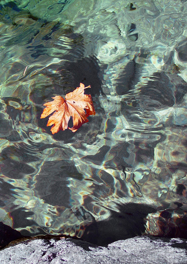 Downieville Photograph - Floating Leaf by Nathan Anglin