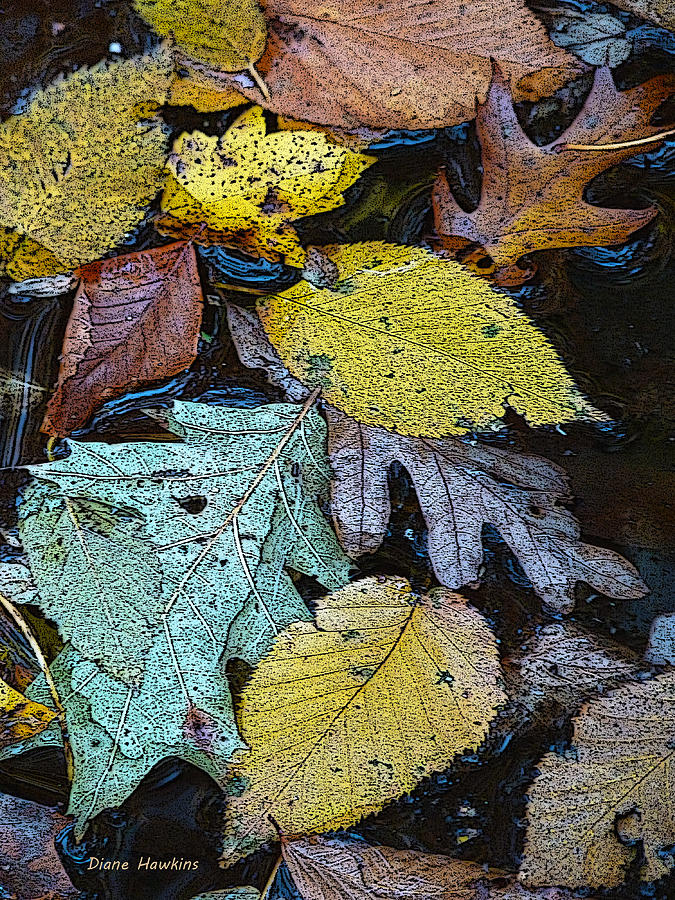 Floating Leaves Photograph