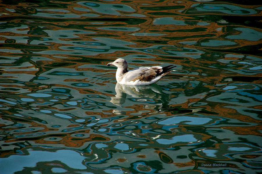 Duck Photograph - Floating With Color by Donna Blackhall