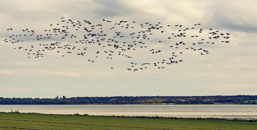 Bay Photograph - Flock Of Birds by Svetlana Sewell