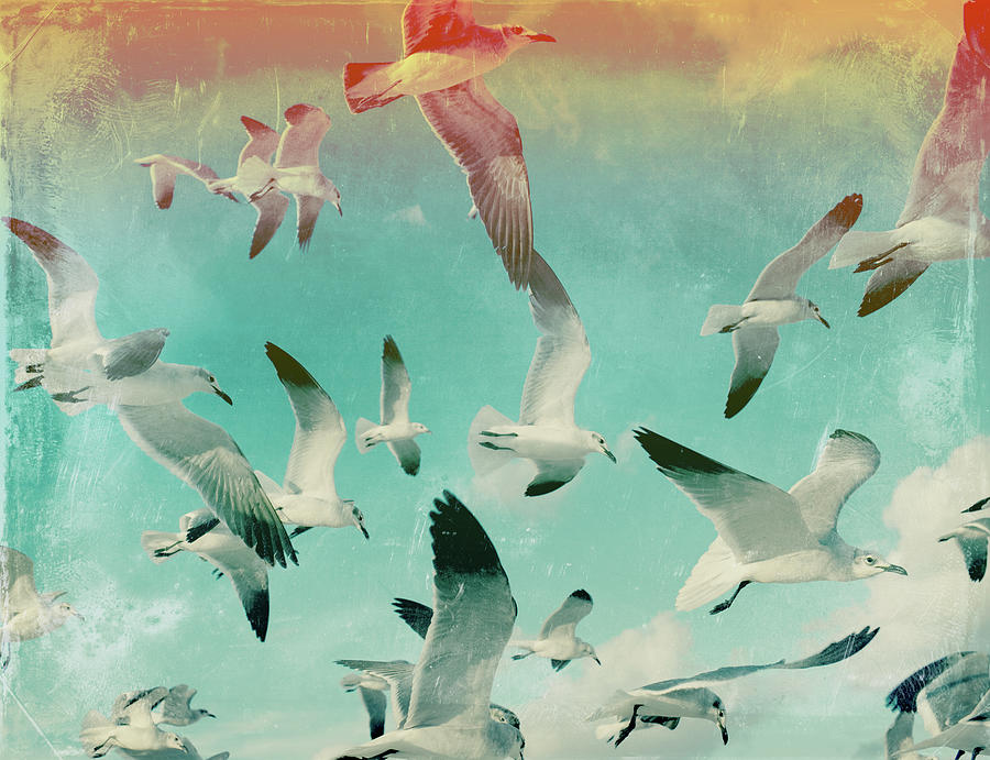 Flock Of Seagulls, Miami Beach Photograph by Michael Sugrue