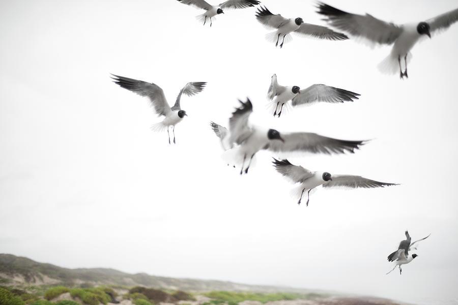 Flock Of Seagulls Photograph by Olga Melhiser Photography