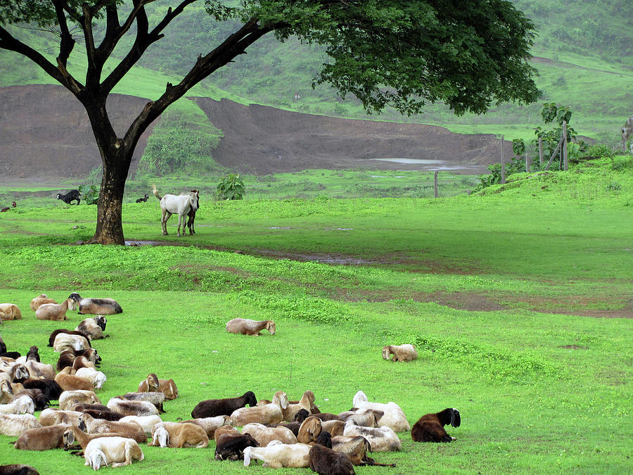 Flock Of Sheep Photograph by Happy Happy World