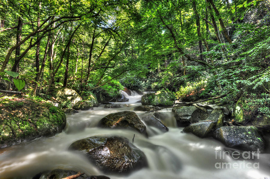 Kayak Photograph - Flooded Small Stream  by Dan Friend