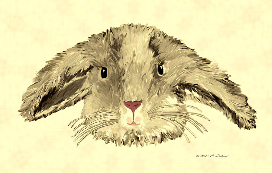 Bunny Drawing - Floppy Bunny by Elizabeth S Zulauf