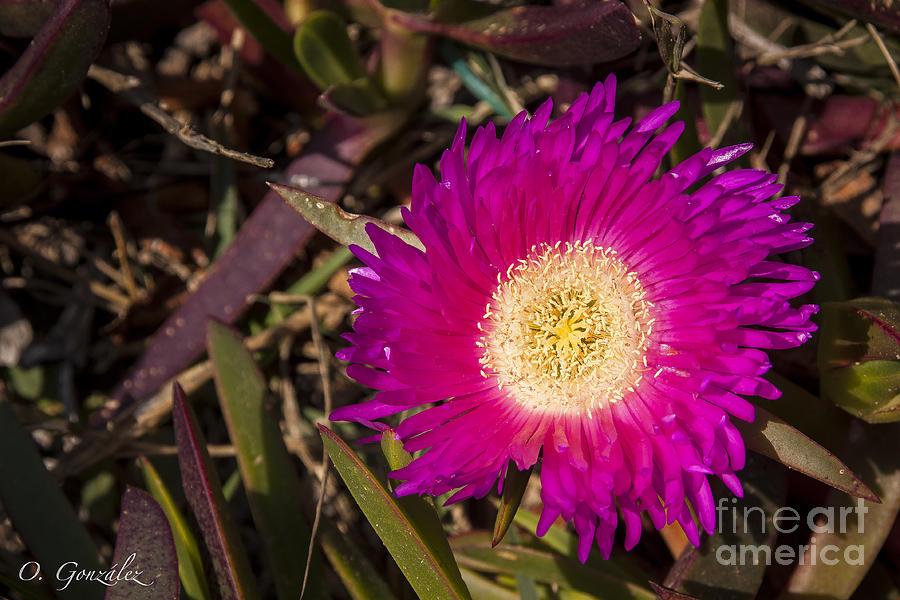 Flor03 Photograph by Omar Gonzalez