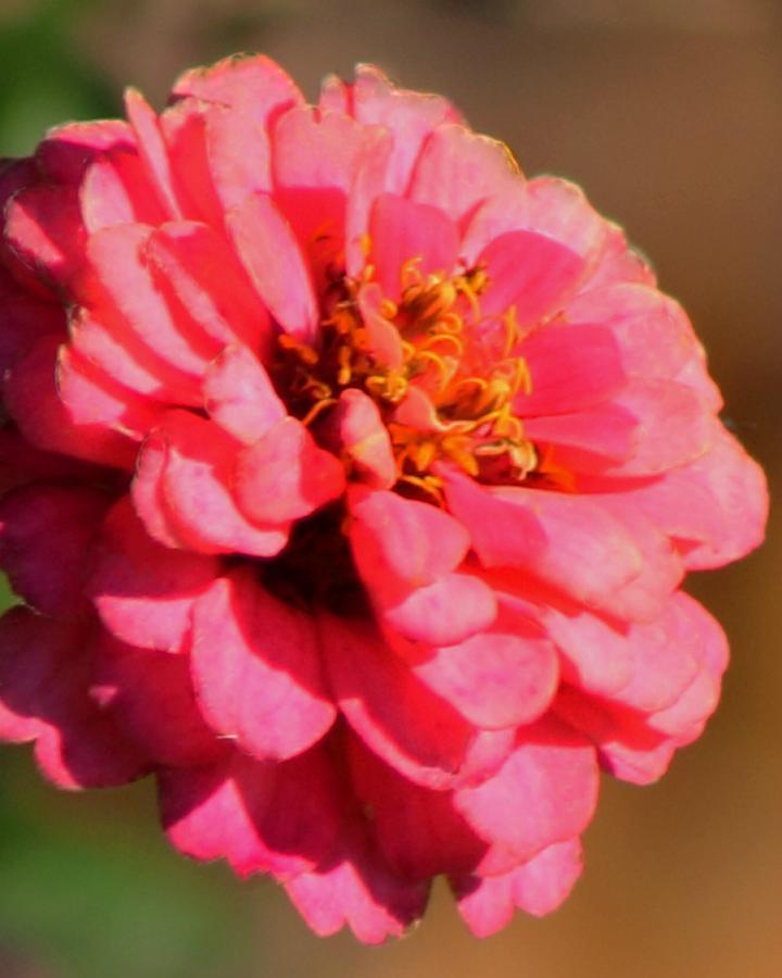 Flora Photograph - Flora by Rhonda Humphreys