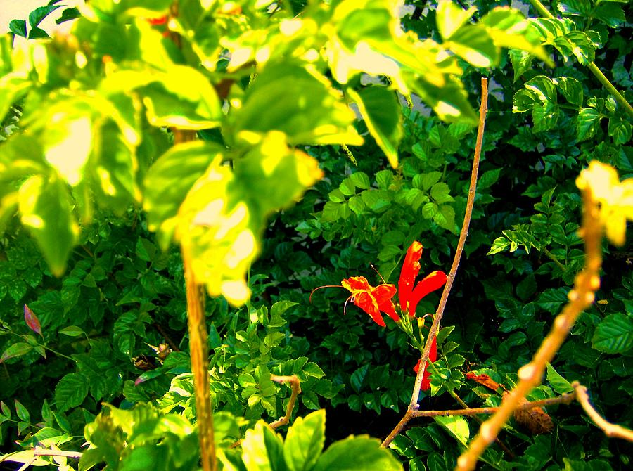 Florals Photograph - Floral 4 by Dan Twyman