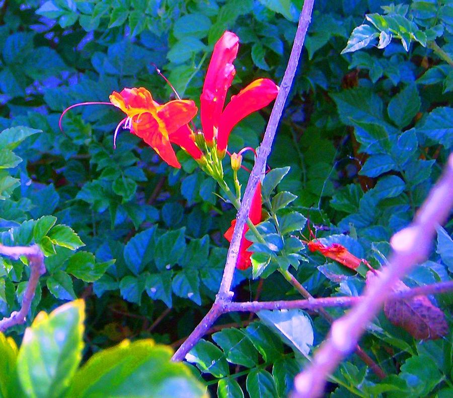 Florals Photograph - Floral 5 by Dan Twyman