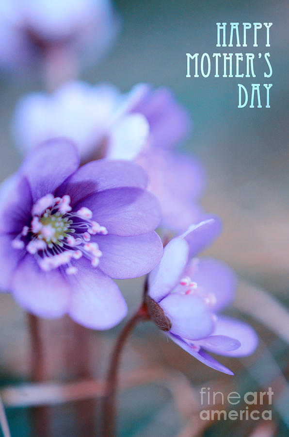 Floral Blues Mothers Day Photograph