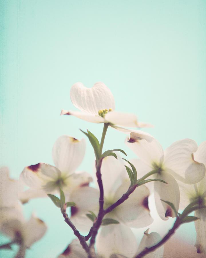 Aqua Photograph - Floral Celebration by Kim Fearheiley