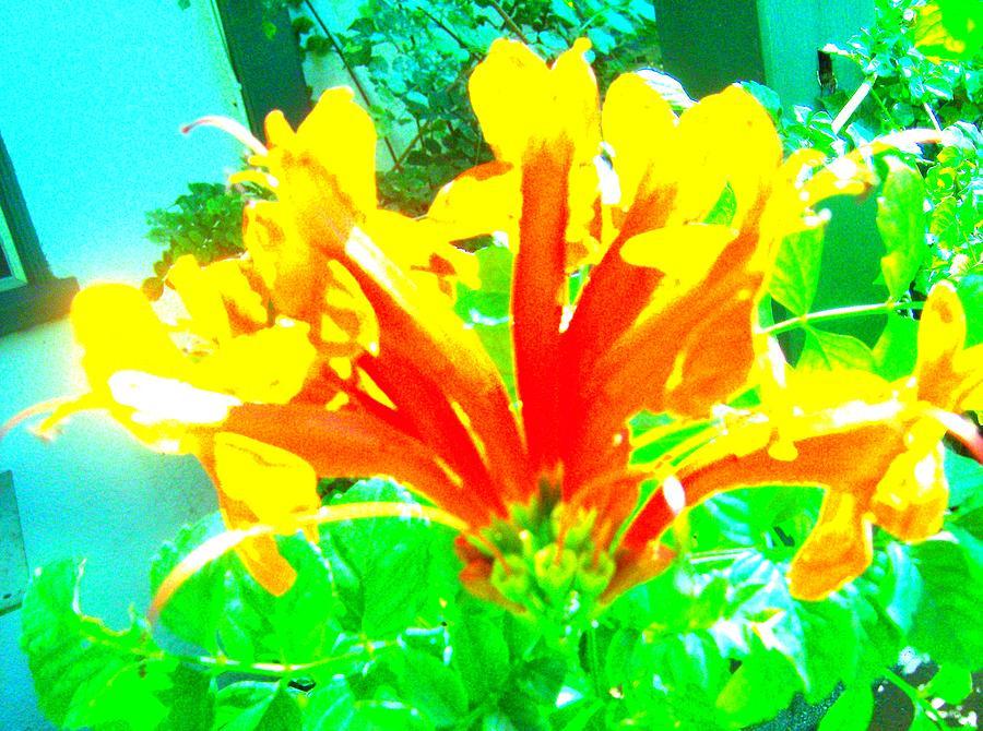 Floral Photograph - Floral by Dan Twyman
