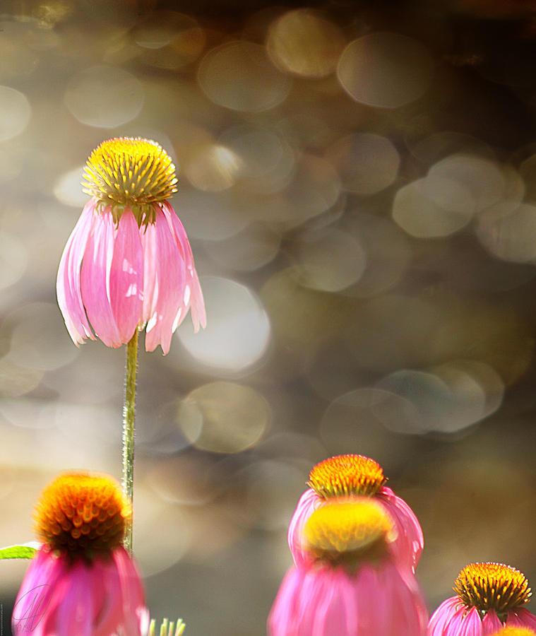 Flowers Digital Art - Floral Dance by Margaret Hormann Bfa