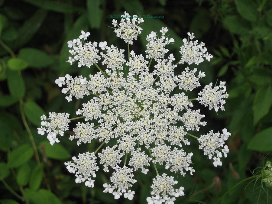 White Disc Photograph - Floral Disc by Sonali Gangane