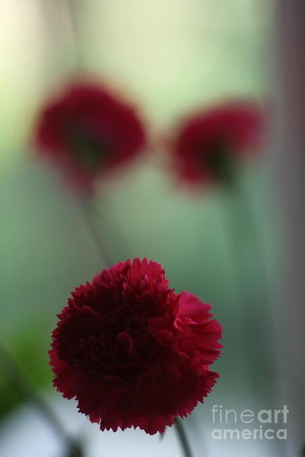 Flower Photograph - Floral Fata Morgana. by  Andrzej Goszcz