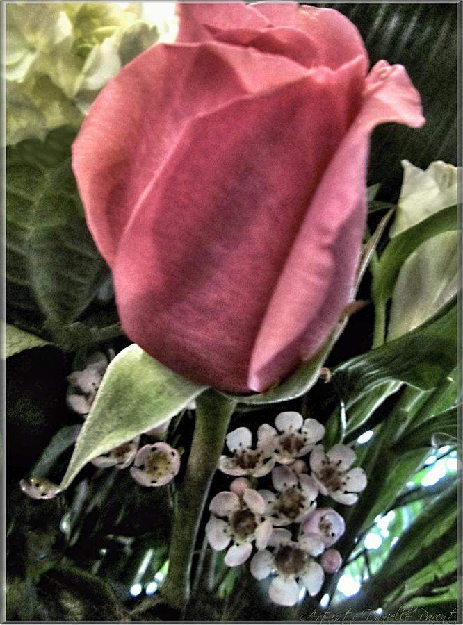 Artiste Danielle Parent Photograph - Floral Mix One Red Rose by Danielle  Parent