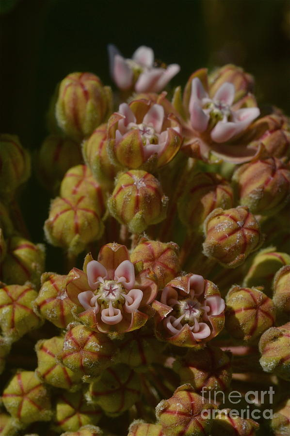 Floral Mouths Photograph