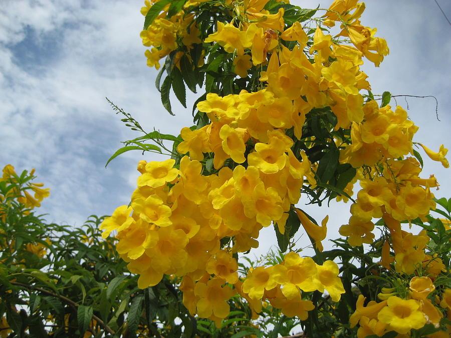 Flores Mil  3 Photograph by Maria Akemi  Otuyama