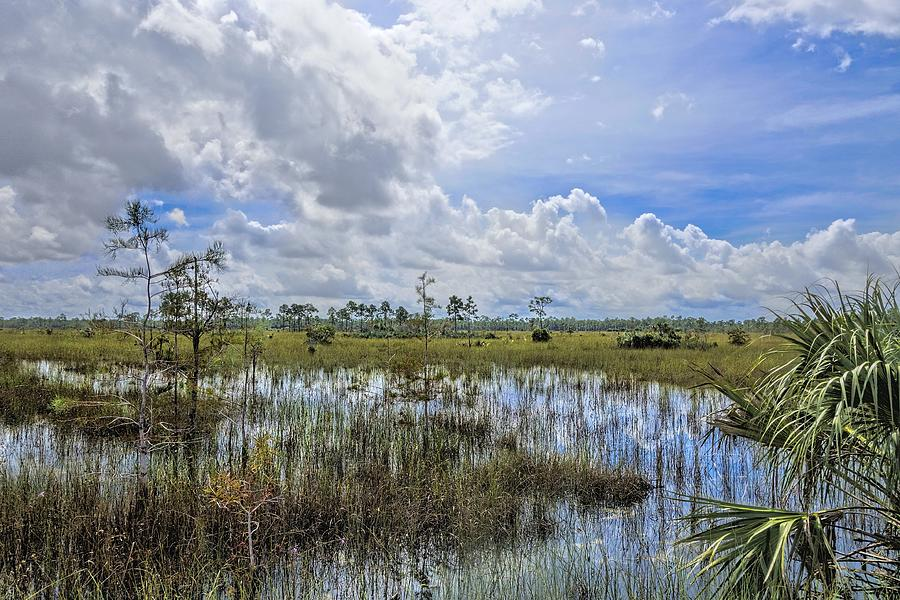 Everglades Photograph - Florida Everglades 0173 by Rudy Umans