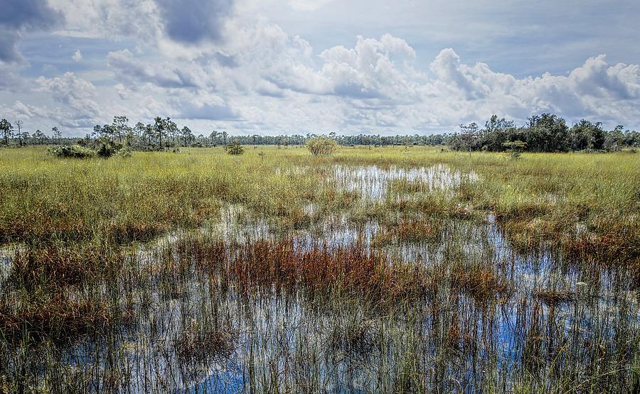 Everglades Photograph - florida Everglades 0177 by Rudy Umans