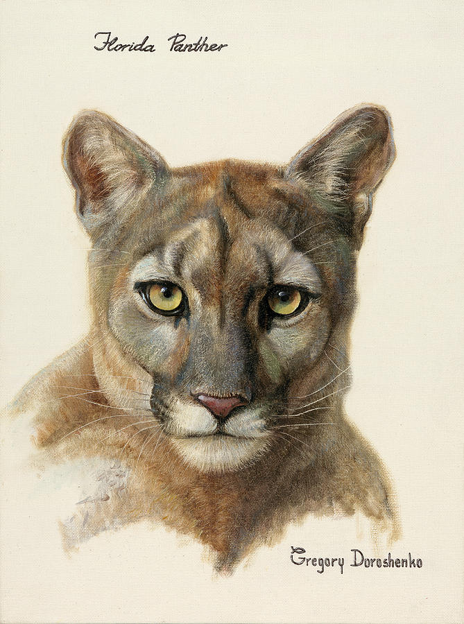 Florida Panther Painting - Florida Panther by Gregory Doroshenko
