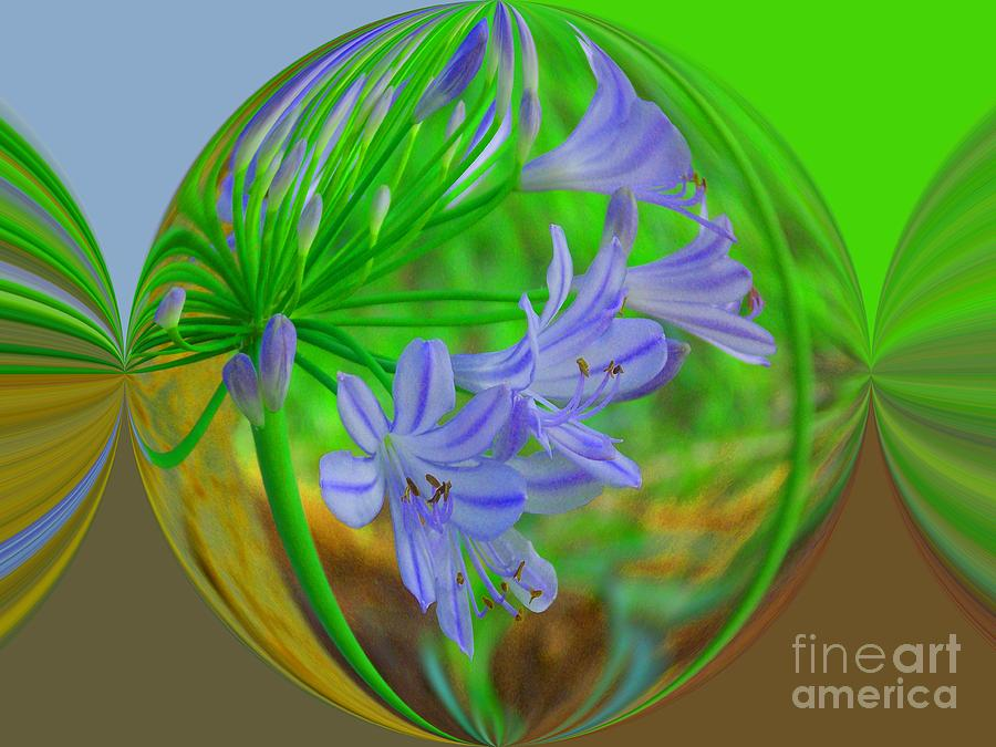 African Lilies Photograph - Florida Power Candy by Annette Allman