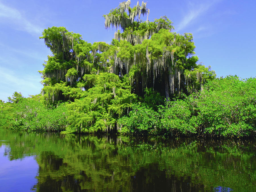Swamp Photograph - Florida Swamps by Carey Chen