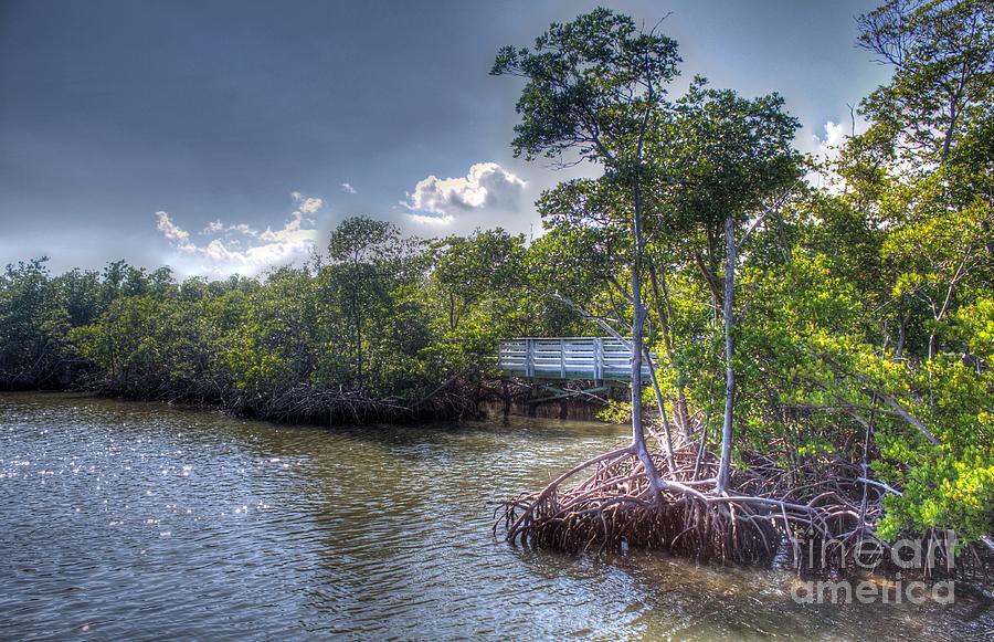 Dawn Photograph - Floridas Dawn by Ines Bolasini