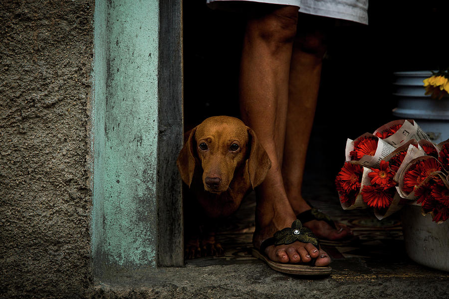 Cuba Photograph - Florists Dog by Inge Schuster