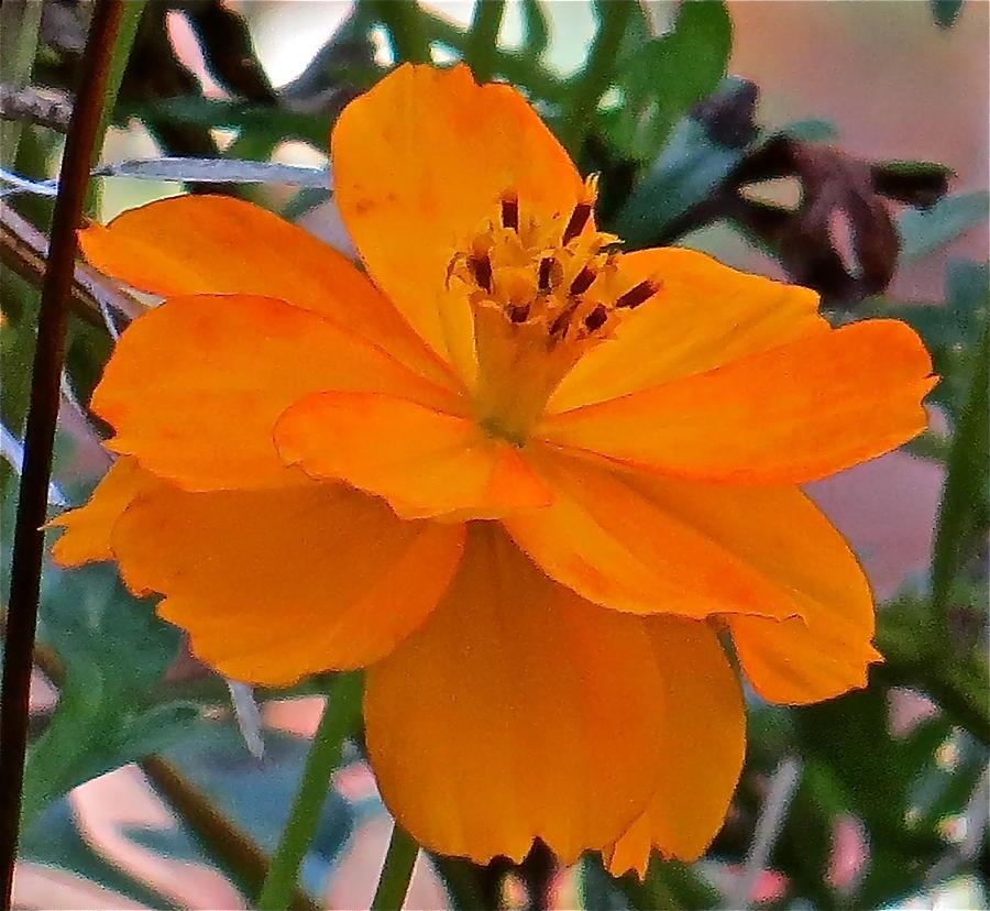 Flower Photograph - Flower 115 by Patsy Pratt