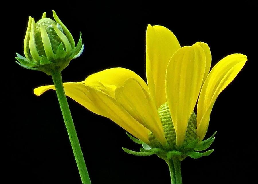 Flower Photograph - Flower 119 by Patsy Pratt