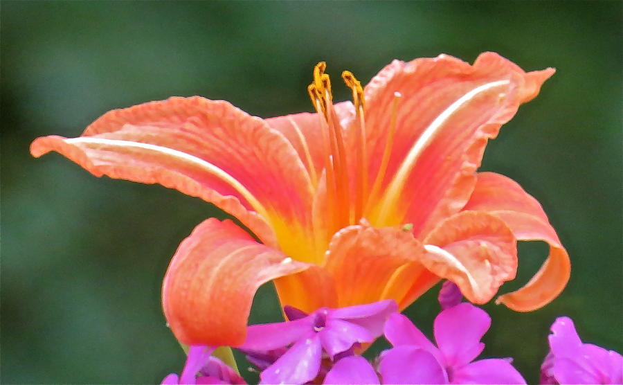 Flower Photograph - Flower 122 by Patsy Pratt