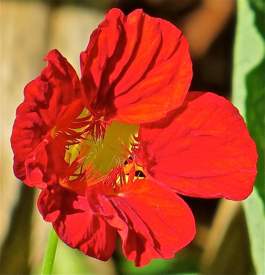 Flower Photograph - Flower 123 by Patsy Pratt