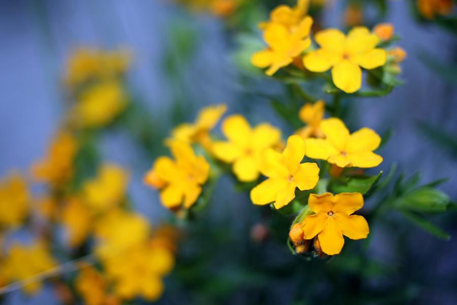 Flower 2 Photograph