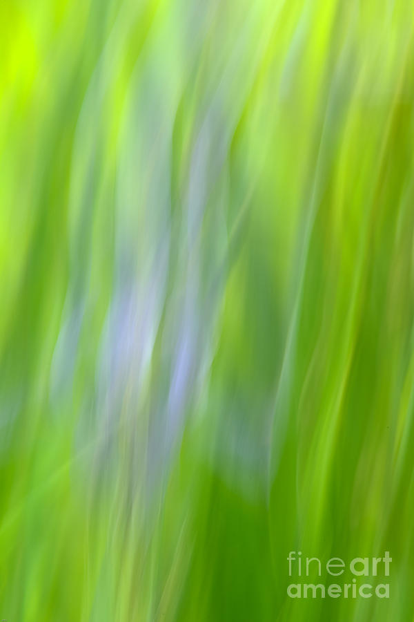 Greens Photograph - Flower Abstract by Kelly Morvant