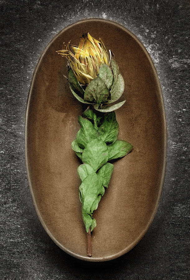 Flower Photograph - Flower And Bowl by Tony Ramos